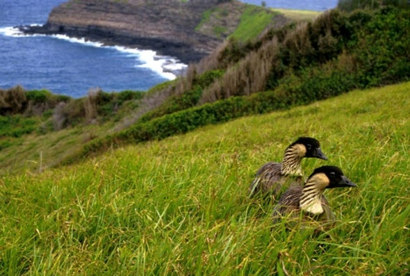 Another Threat to Hawaiian Birds: Cat Poop