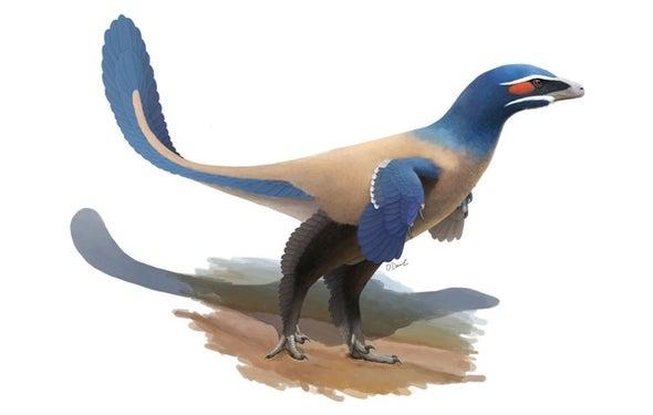 Paleo Profile: Currie's Alberta Hunter