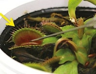 Plants, Like People, Succumb to Anesthesia [Video]