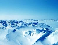 Arctic creepy-crawlies part I: the ice worms