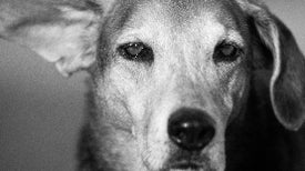 The History of Science in Animal Shelters