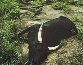 August 21, 1986: The Lake Nyos Catastrophe