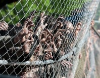 The Walking Dead Shuffles Into Science Education With Bolts, Brains, and a Physics Quiz