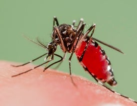 Tick- and Mosquito-Borne Diseases Are Increasing Dramatically