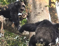 Chimps Will Share Their Lunchbut Only If They Like You
