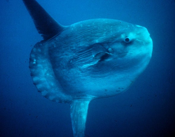 How to Keep an Ocean Sunfish Clean
