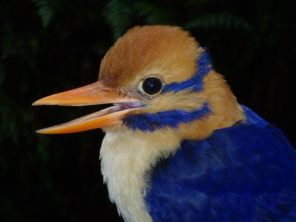 "Beautiful ""Mustached"" Bird, Lost for 60 Years, Photographed for First Time"