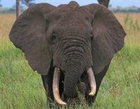 Poachers versus Poop