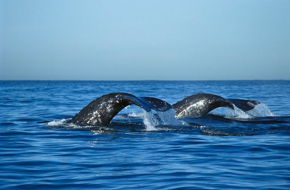 Marine Protected Areas Are Important, but...