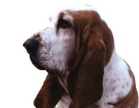 A Simple Test Unlocks the Dog's Nose
