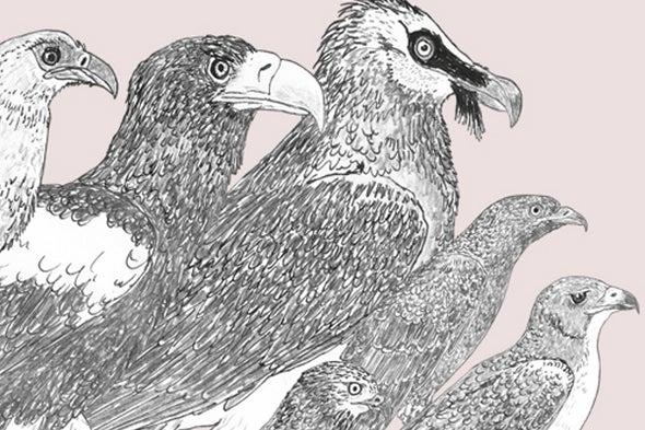 Raptors Once More (Raptors, Part 2)