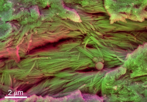 75-Million-Year-Old Dinosaur Soft Tissue Suggests Ancient Organic Preservation May Be Common
