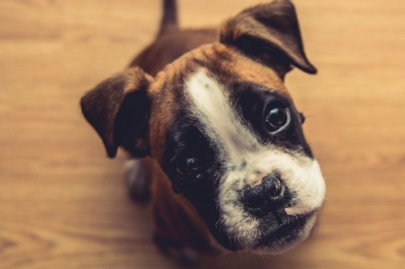 What a Dog Geneticist Wants You to Know about Dog Genetics