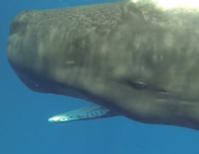 Close, Peaceful Whale Encounters Captured on Video