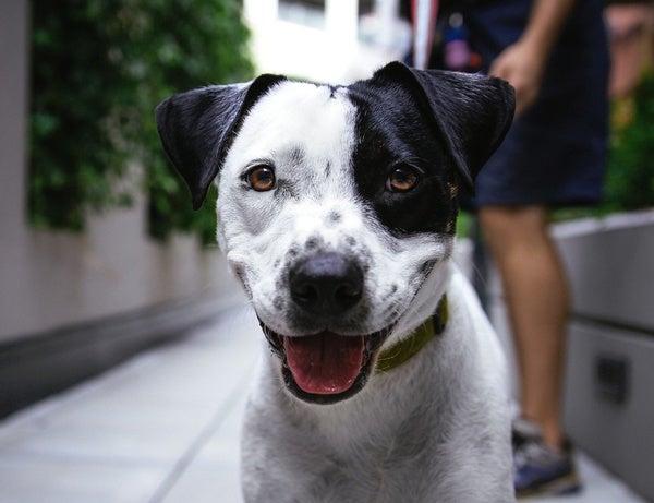 Pets Can Build Community