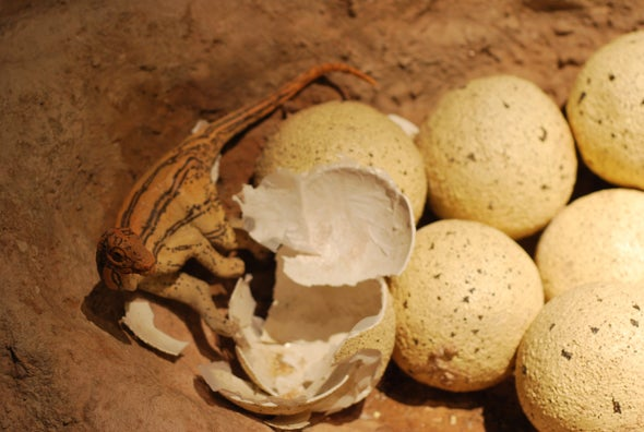 Dinosaur Eggs under Stress