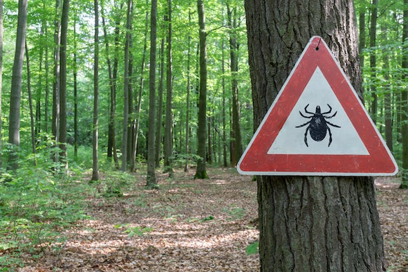 In the Battle against Lyme Disease, the Ticks Are Winning