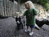 Like The Honey Badger, Petting Zoo Animals Don't Care