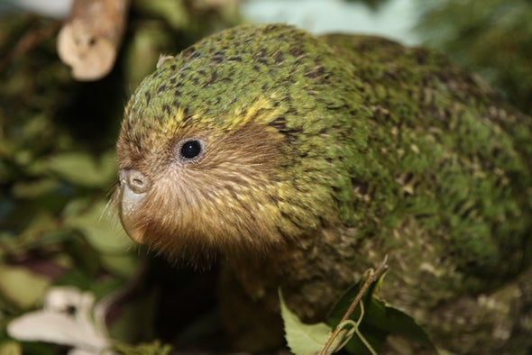 Every Member of This Rare Bird Species Is About to Get Its Genome Sequenced
