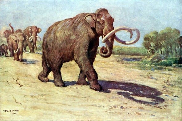 A New Solution to an Old Mammoth Mystery
