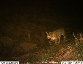 Camera Trap Tuesday: Islands in Los Angeles
