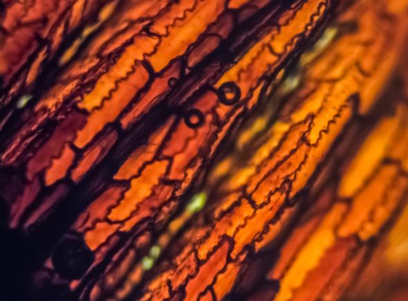 The Magic of the Microscopic World