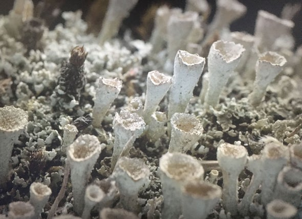 What Lichens Can Teach Us