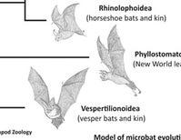 Fossil Bat Stories, Part 2: What Are Noctilionids? What Are Noctilionoids?