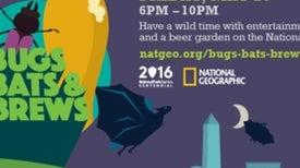 Bugs, Bats, Brews and BioBlitz in Washington, D.C.!