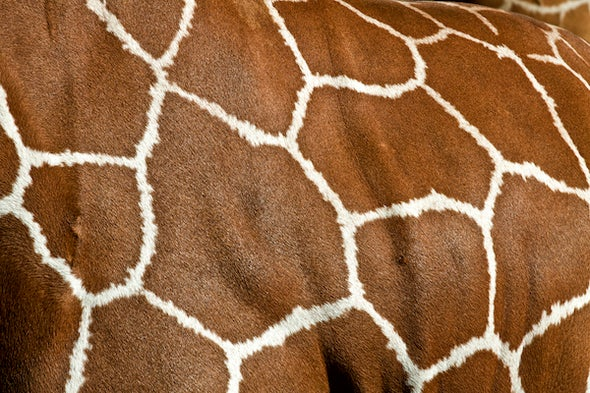 Voronoi Tessellations and Scutoids Are Everywhere