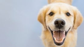 Are Dogs Probiotic?