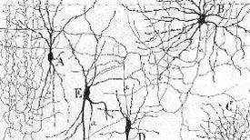 How Studying Neuroscience Transformed My Brain