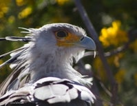 Photoblogging: Secretary Bird