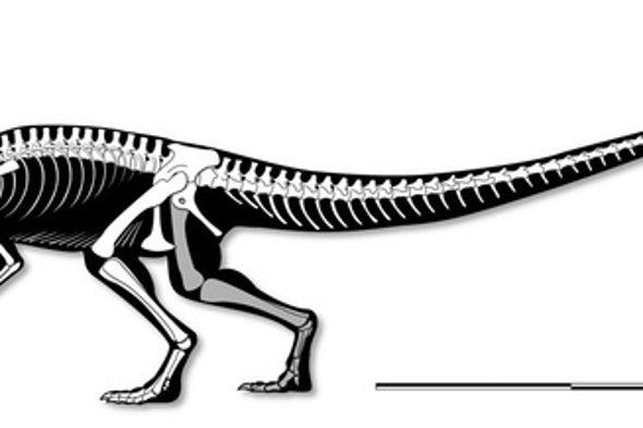 Stunning Skeleton Reveals Early Carnivorous Dinosaur