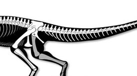 Stunning Skeleton Reveals Early Carnivorous Dinosaur