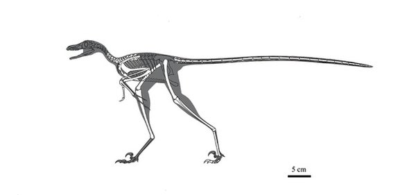 Paleo Profile: Yang Zhongjian's Lizard
