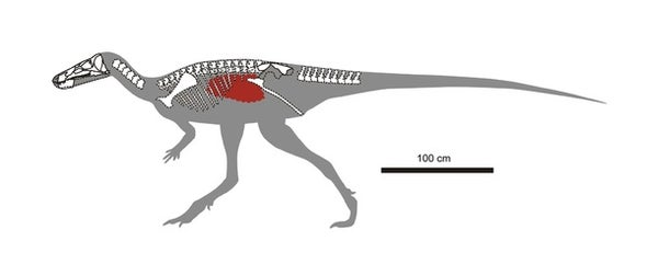 Paleo Profile: Isabel Berry's Dinosaur