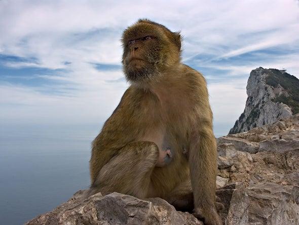 Climate versus Primate: Dawn of Extinction?