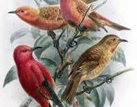 13 Bird Species Declared Extinct