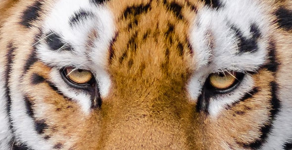 The 301 Mammal Species Most Threatened by Overhunting
