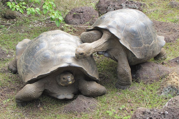 The Rise of the Bro Tortoise