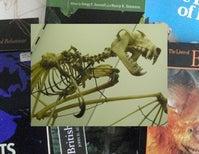 Fossil Bat Stories, Part 1
