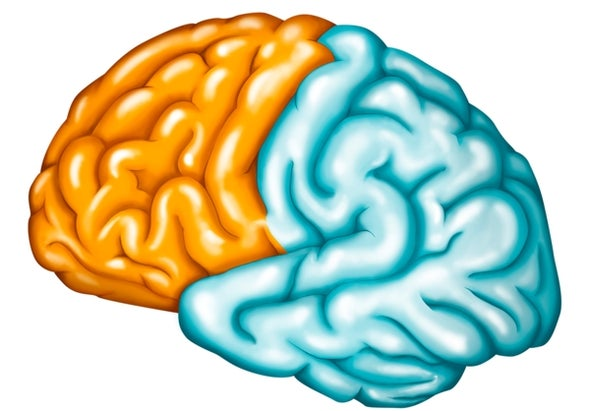 """A Q&A with the Scientist Who Helped Create the """"Cortex in a Dish"""" System"""