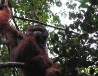 Call of the Orangutan: An Expedition to Indonesia