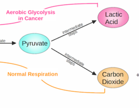 The Hallmarks of Cancer 9: Reprogramming Energy Metabolism