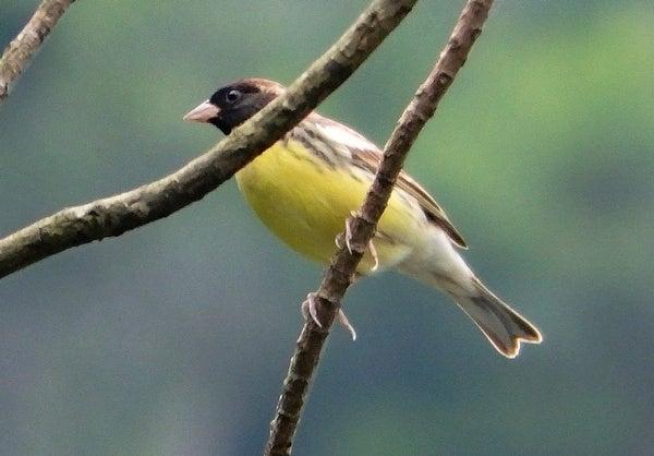 222 Bird Species Worldwide Are Now Critically Endangered