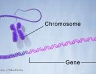 Next-Gen Sequencers Link 100-Plus Genes to Autism