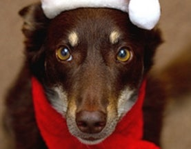 28 Santa-Approved Dog Science Articles