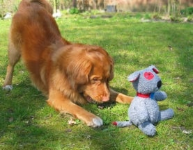 Studies Find Dogs Prefer New Toys, But You Can Make Old Toys New