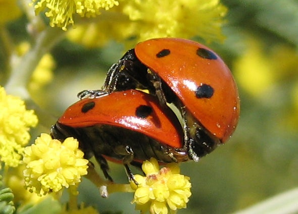 There's Love--and Ladybugs--in the Air